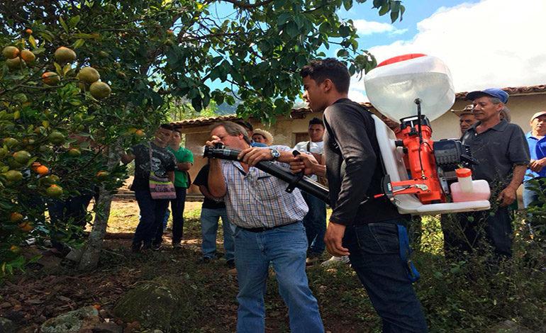 SAG da asistencia técnica a citrícolas de Cedros