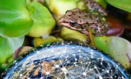 Científicos nipones se inspiran en las ranas para mejorar telecomunicaciones