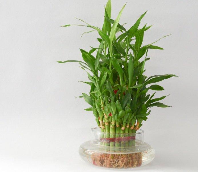 Plantas de interior  2