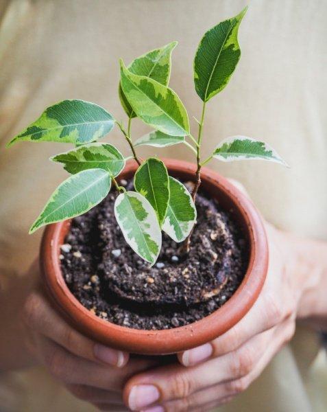Plantas de interior  5