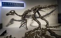 Dinosaurio kamuysaurus japonicus japonjpg
