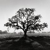 Ansel-adams-oak-tree-sunrise-10064_opt_m