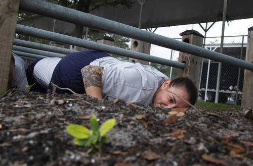 Woman crawls under obstacle course.