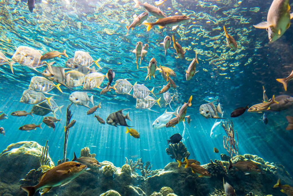 Image result for florida aquarium tampa