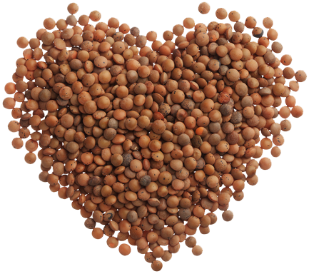 Lentils in shape of heart
