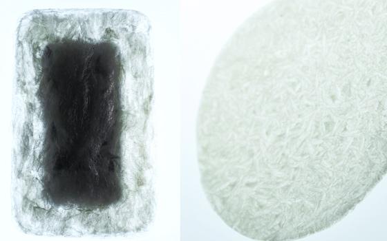Agar Plasticity