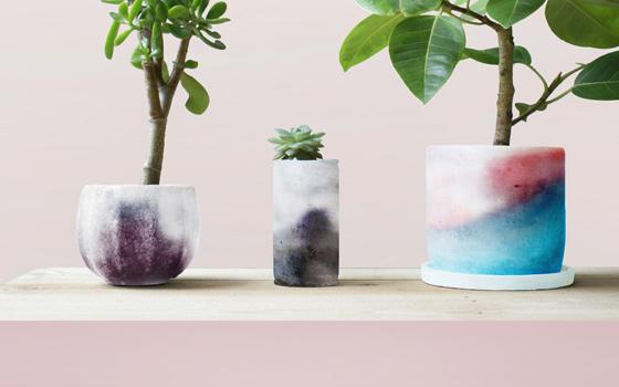 Plants-Skin