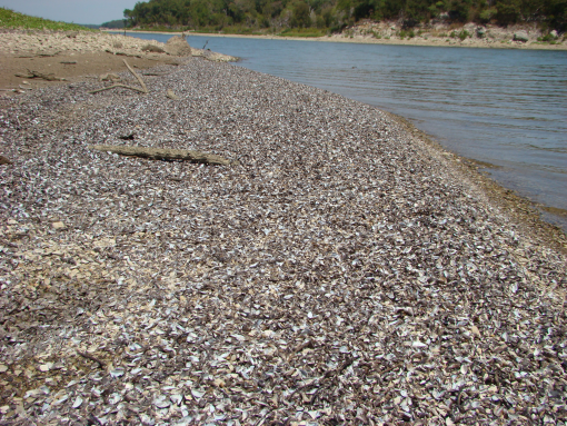 New rules in the works to fight zebra mussels for Texas parks and wildlife fishing report