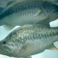 Possum kingdom lake online guide for Tpwd fishing reports