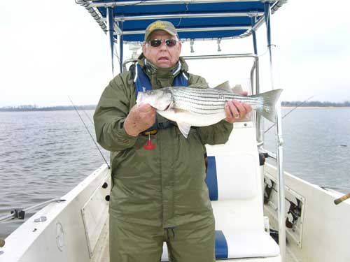 Reel livin guide service lake texoma for Fishing guides on lake texoma