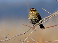 Master Naturalists Learn to ID Birds