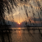 Weeping Willow Sunset