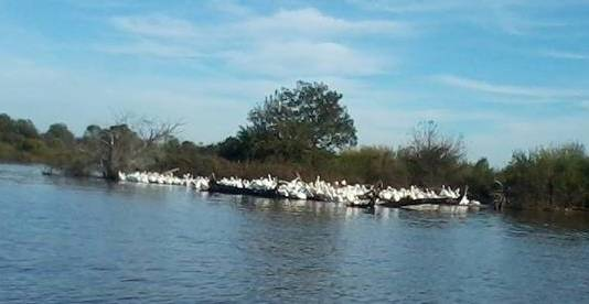 Grand lake ok in pictures pelican festival time grove for Grand lake ok fishing report