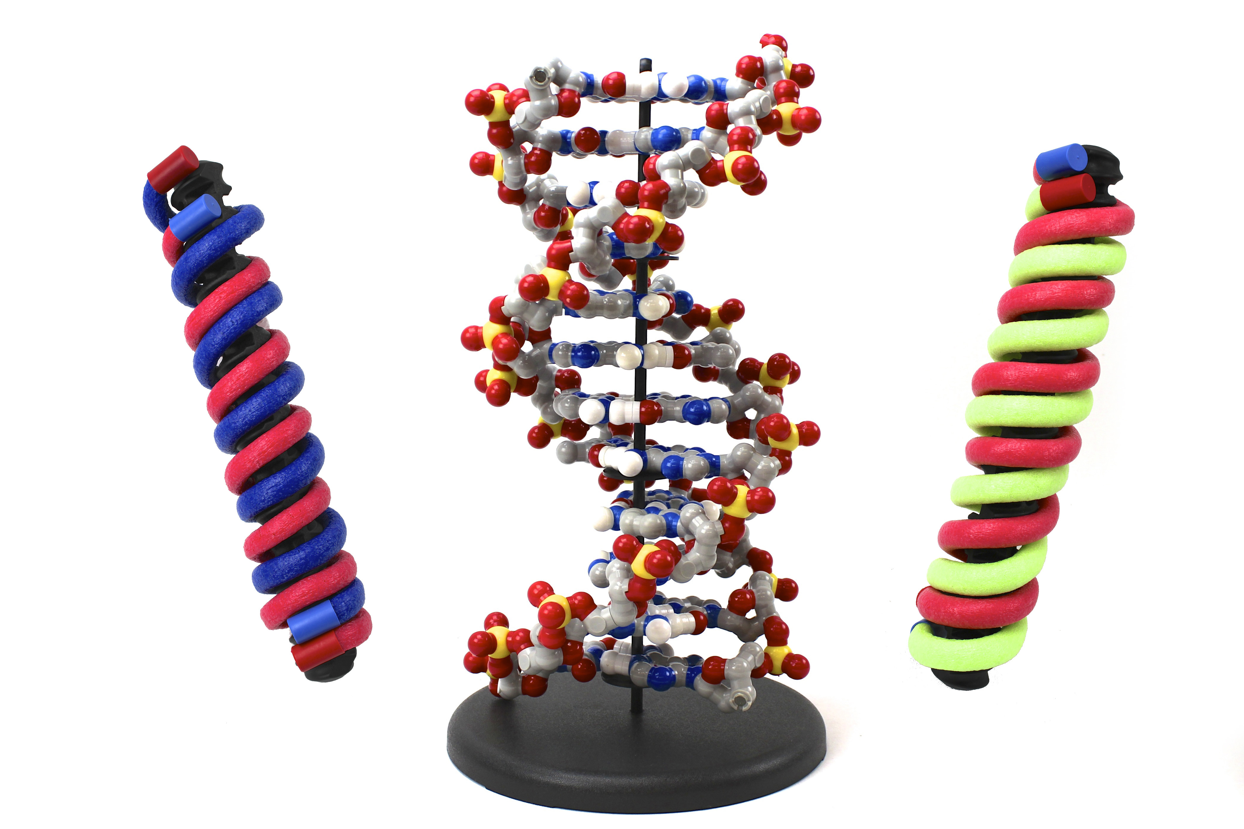DNA Discovery Kit