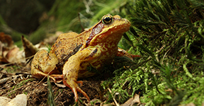 Frog seated on forest floor