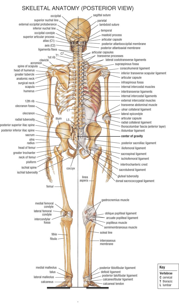 Introduction - Human Anatomy and Physiology Resources - LibGuides ...