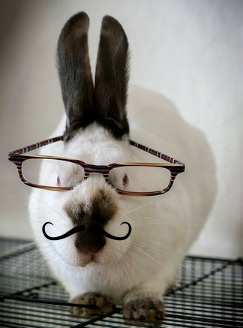 Bunny with glasses and mustache