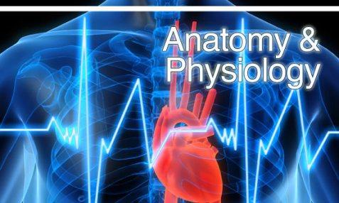 Anatomy & Physiology - Science - LibGuides at Washington County ...