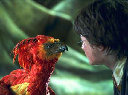 harry potter and a phoenix