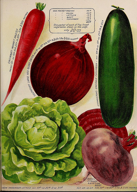 Vegetables from Biodiversity Heritage Library