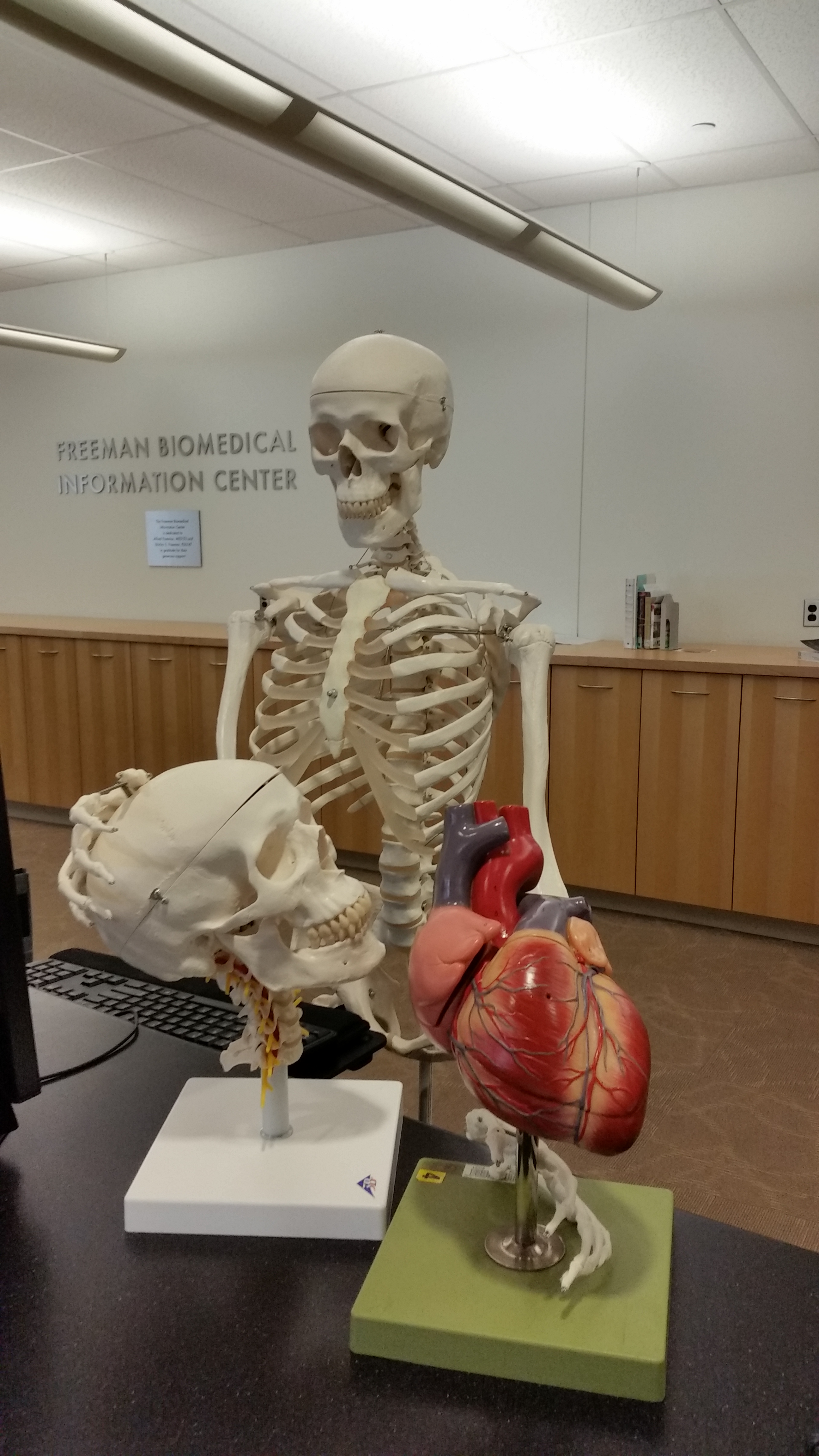 Print Book Options - Anatomy at Ginsburg - Research Guides at Temple ...