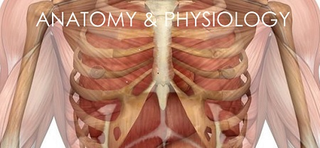 Anatomy & Physiology image