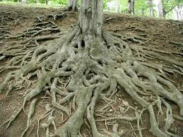 tree with lots of roots - like the direction your thesis could go.