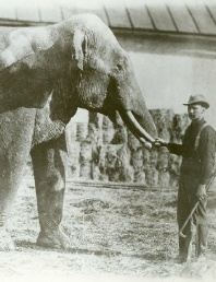 Circus Elephant and Trainer