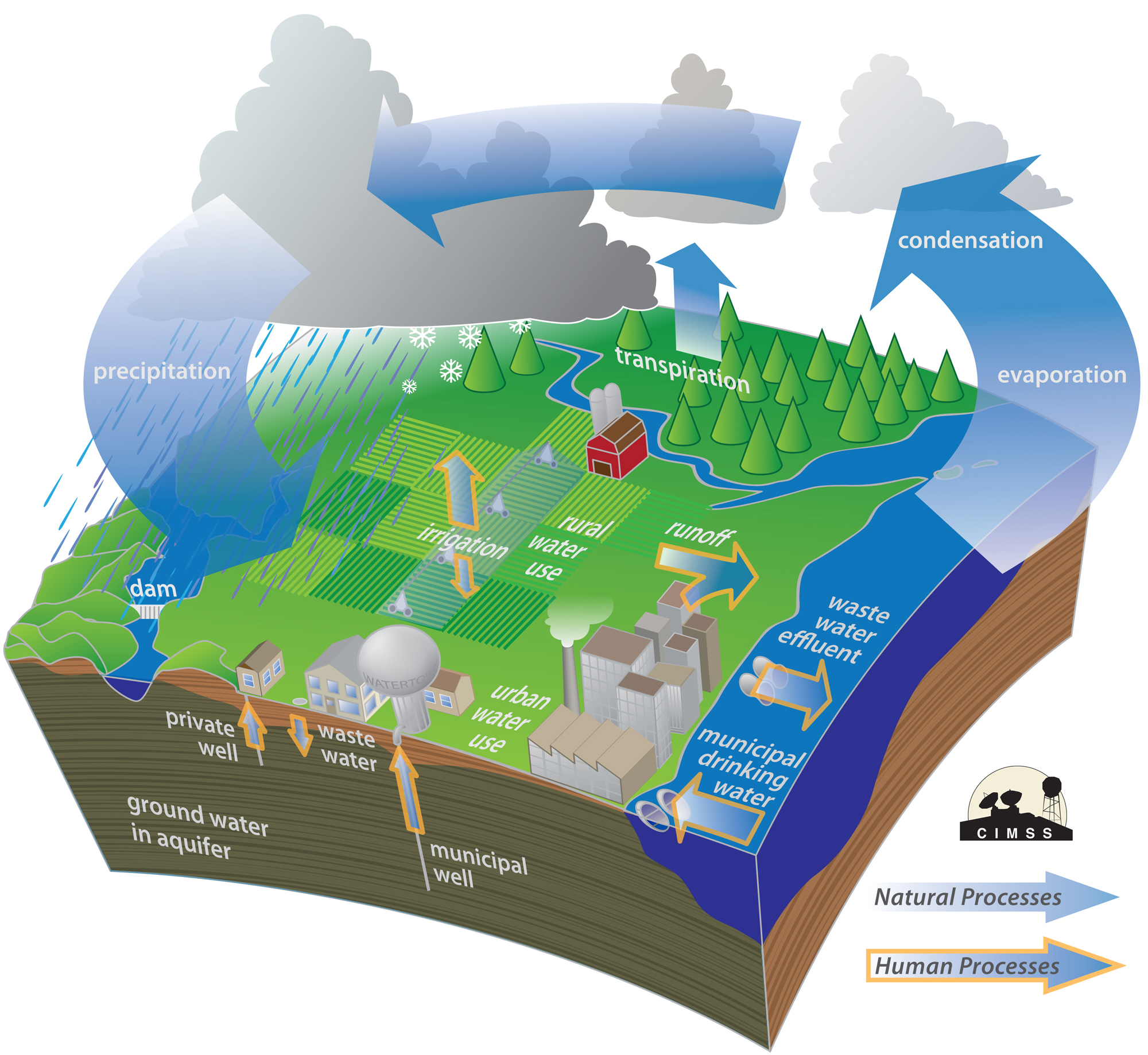 Homework Help Water Cycle  U2013 What Is The Water Cycle