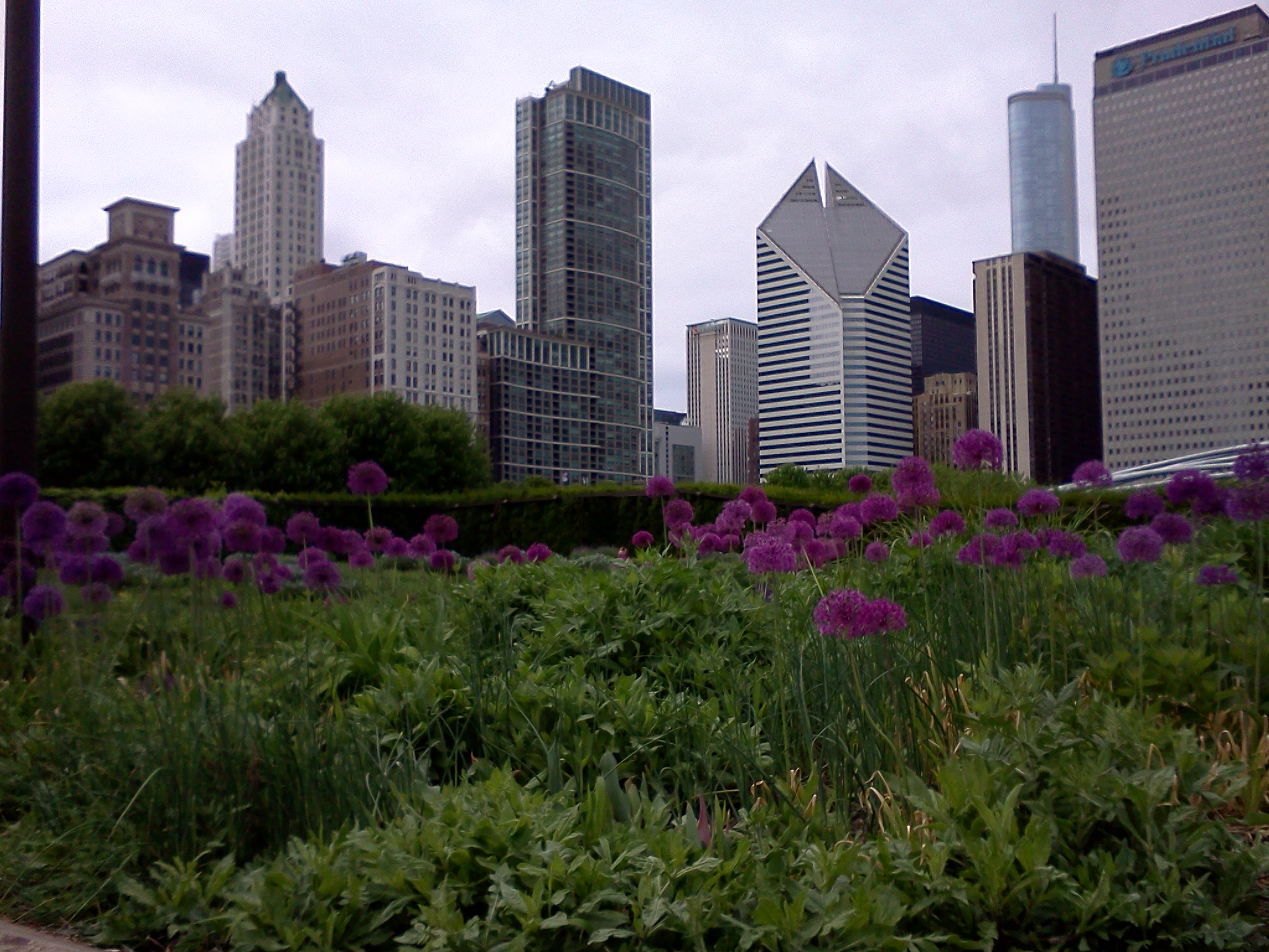 Image of the Lurie Garden in Millennium Park, Chicago, Illinois