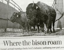 Where the bison roam newspaper clipping