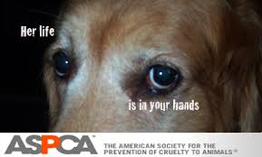 "A picture of the upper part of a dog's face, focusing on the sad eyes. It says, ""Her life is in your hands."" At the bottom, it says, ""ASPCA: The American Society for the Prevention of Cruelty to Animals."""