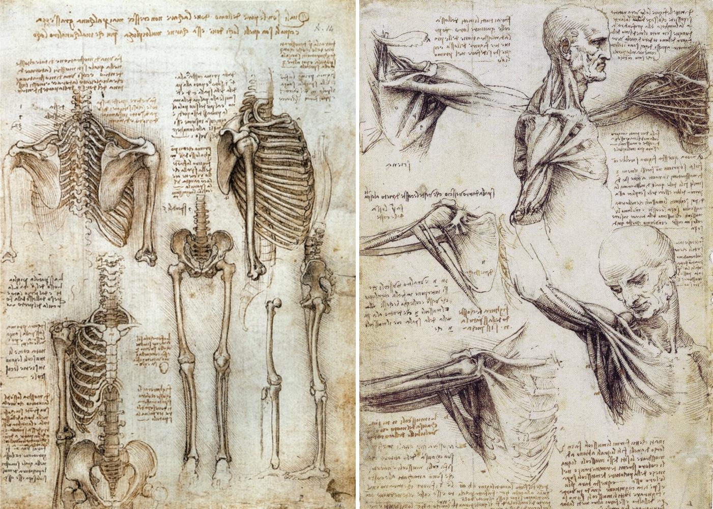 Introduction - BIOL 215/216 - Anatomy & Physiology I & II ...