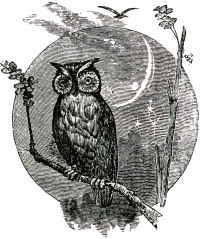 West Florida Seminary picture, owl on tree branch with moon in background