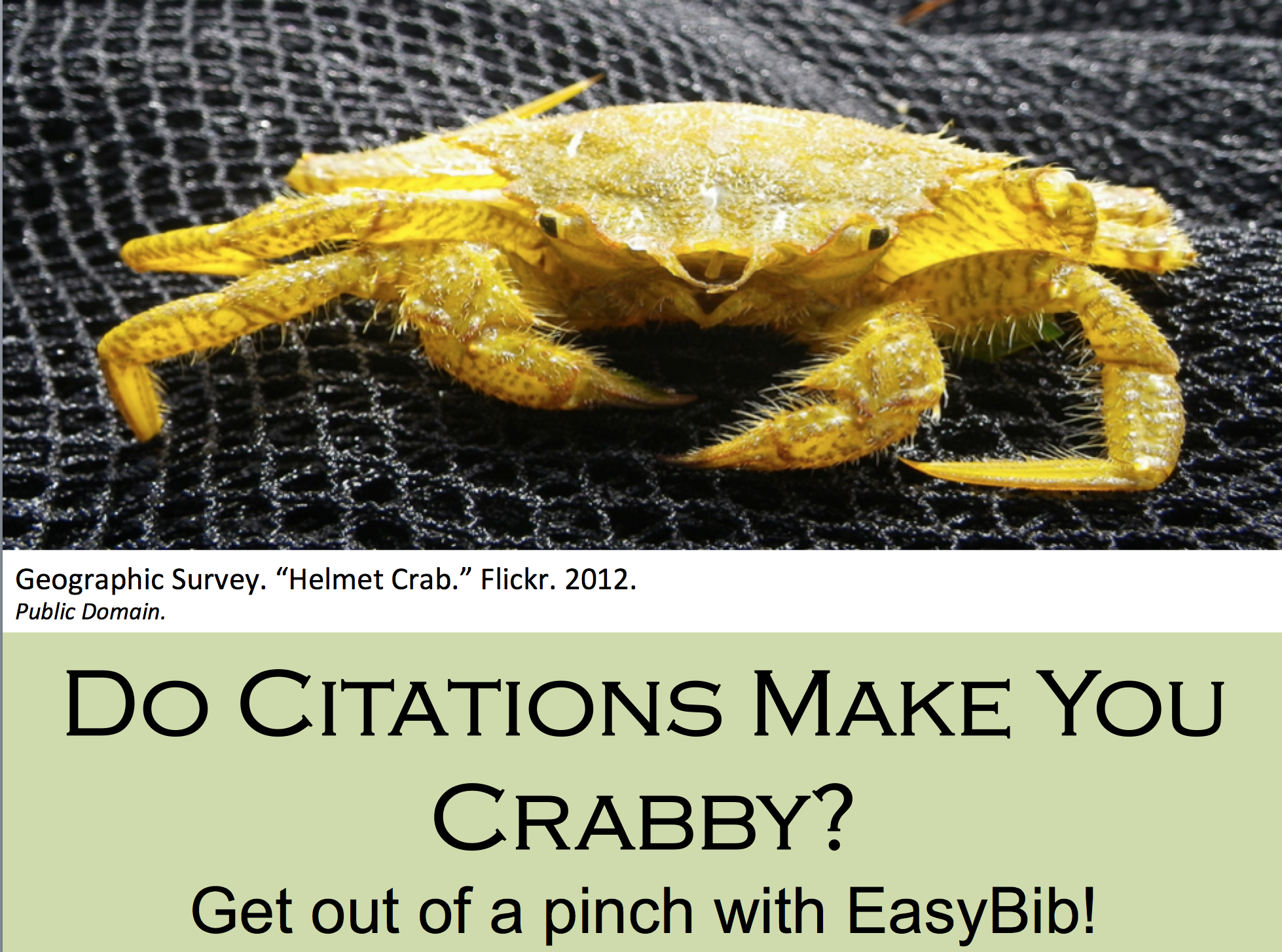 Do Citations make you crabby.  A picture of a yellow helmet crab.