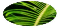 Green palm frond icon