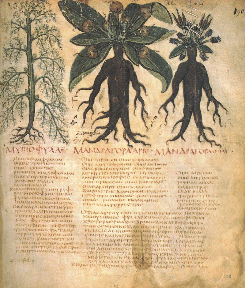 Medieval and Renaissance Illustrations - CLAS 3239 | Ancient ...
