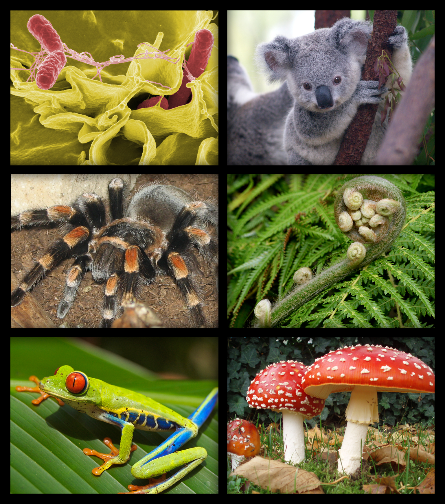 Pictures of plant and animal life