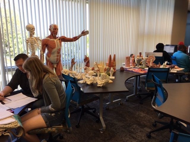 Anatomy and Physiology Tutoring