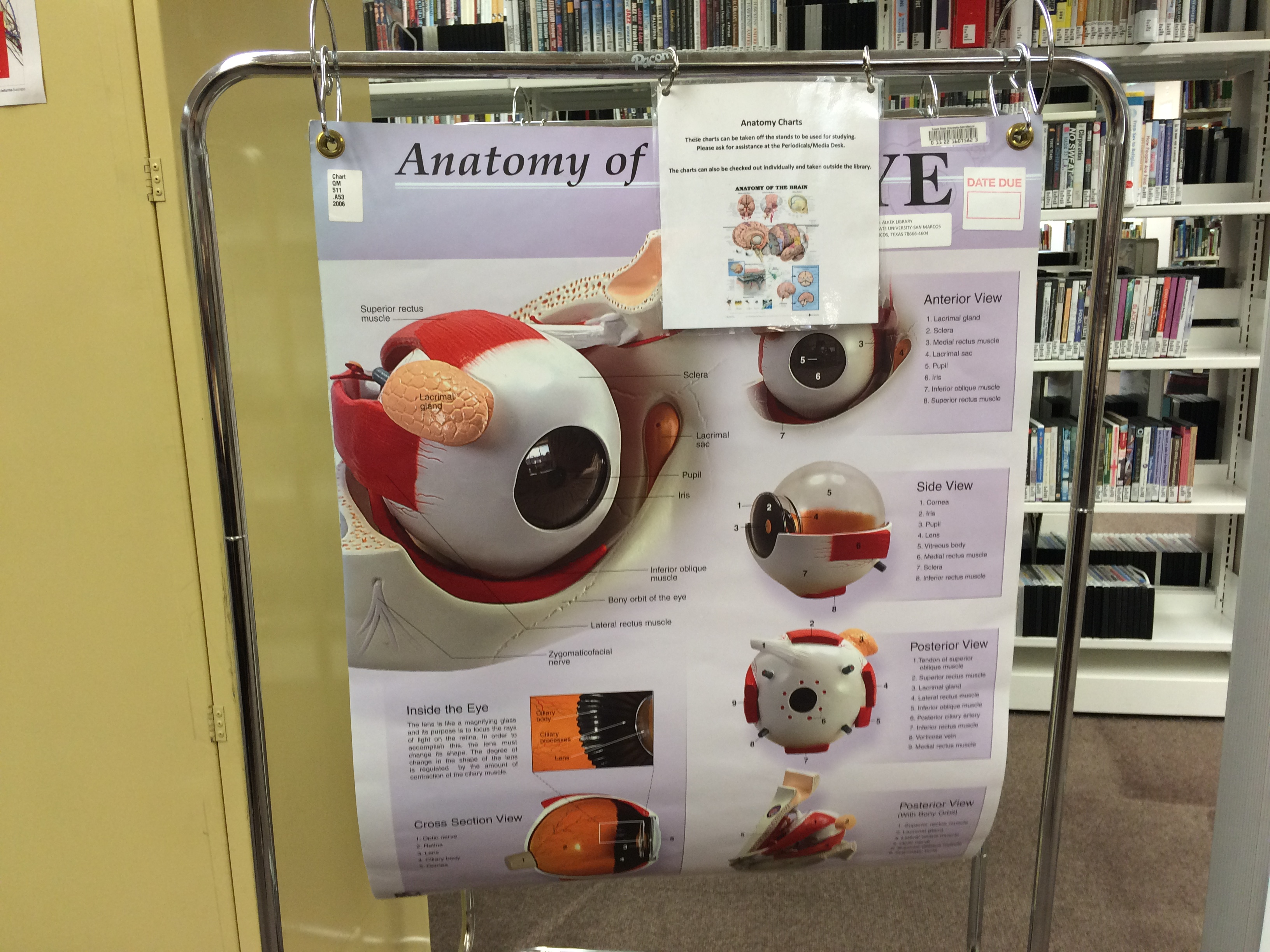 Anatomical Models - Library Collections on 3rd Floor - LibGuides at ...