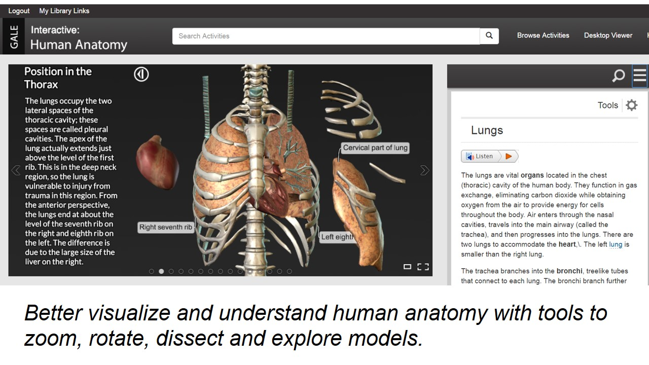 Gale Human Anatomy Database explore model using tools to rotate and dissect