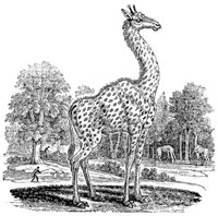 The Graffe or Cameleopard - A General History of Quadrupeds - Page 91