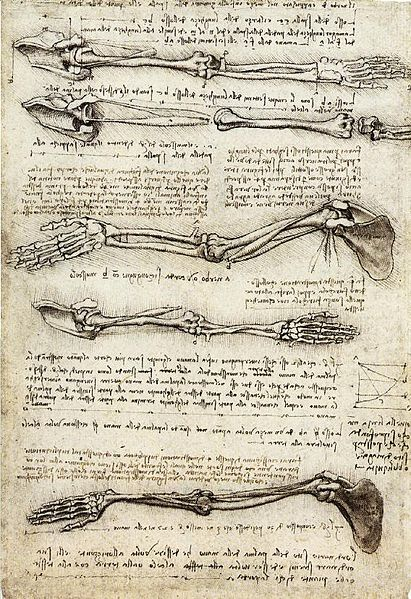 Anatomical Studies of the Arm