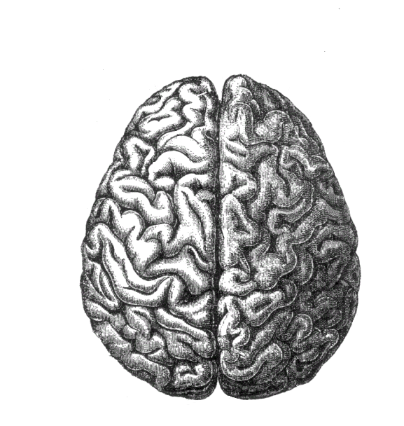 Black and white drawing of a brain