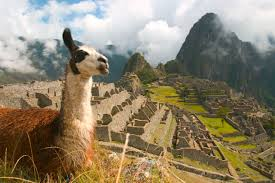 Rural Peru ruins and llama
