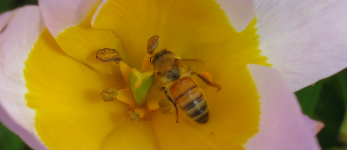 Video-How can beekeepers select less aggressive bees?