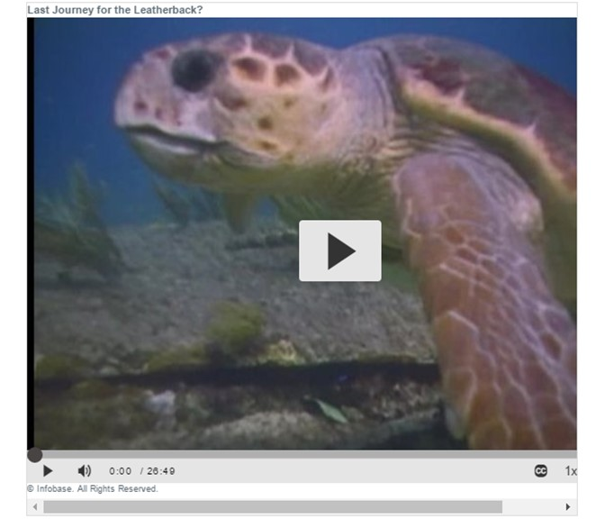 Last Journey for the Leatherback? video provided by Films on Demand database link