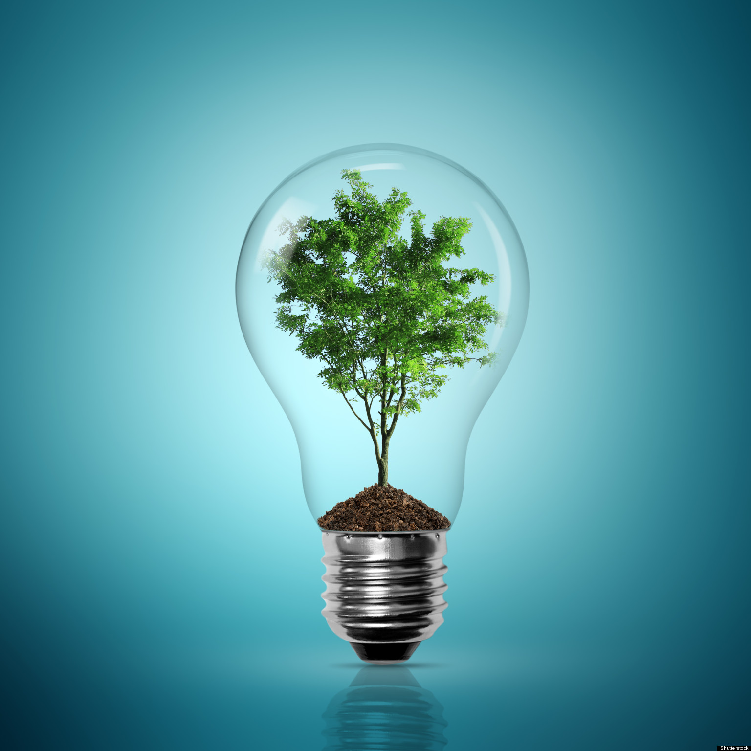 Image of a lightbulb with a tree growing inside it