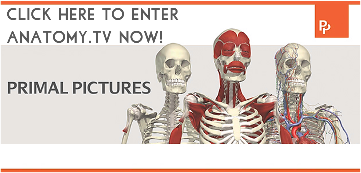 click here to enter anatomy tv now
