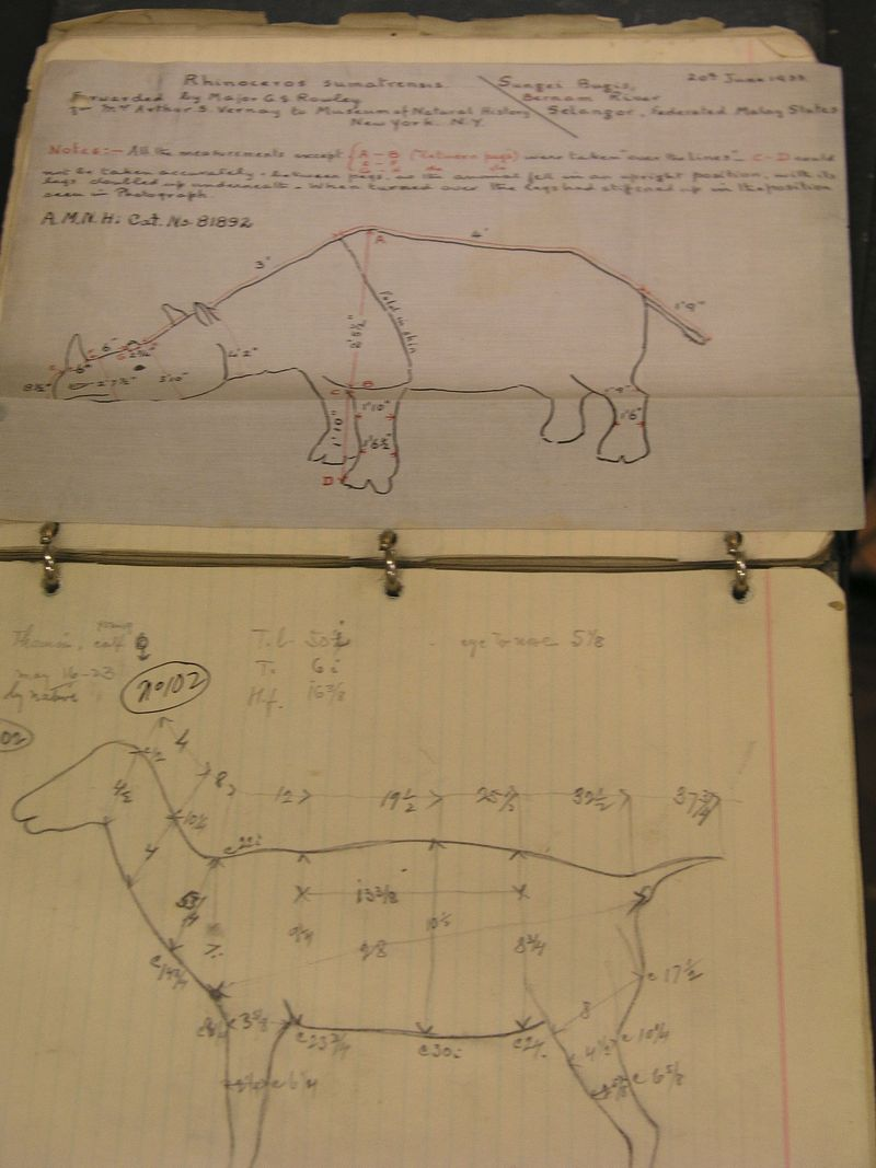 Field book from an African expedition, AMNH Mammalogy Archives, photo courtesy of Vicky Steeves and the American Museum of Natural History